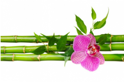 ​Bamboo massage